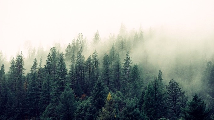 Wald_Schweden