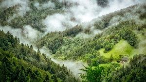 Schwarzwald Instagram