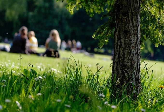Picknick_Fest