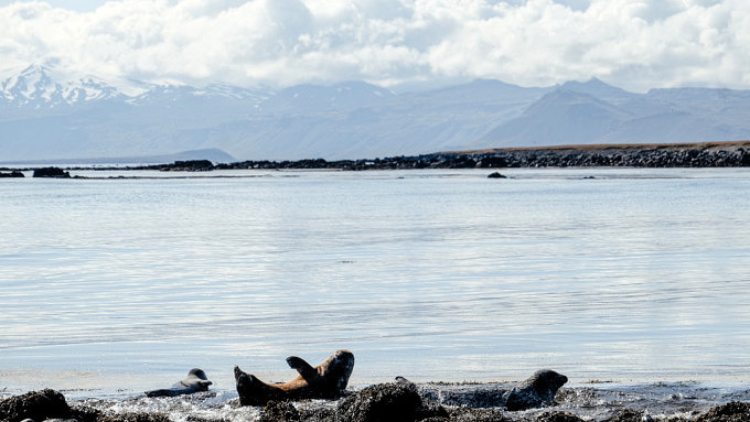Ytri Tunga, Island Natur