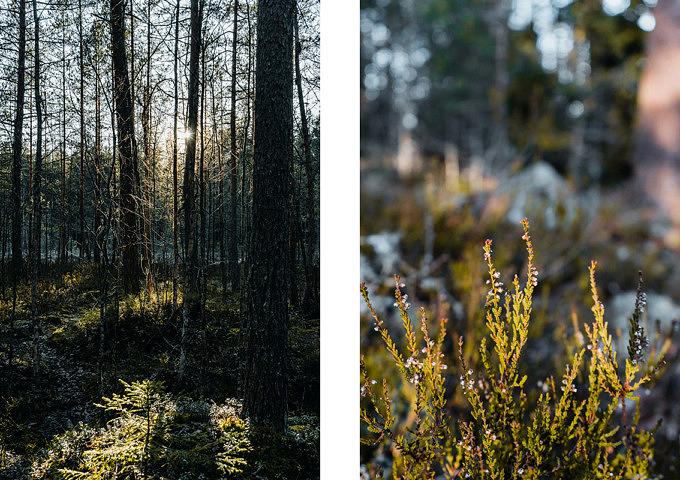 Finnland, Nuuksio Nationalpark, Espoo Finnland