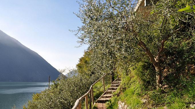 Wanderungen im Tessin, Sentiero dell'ulivo