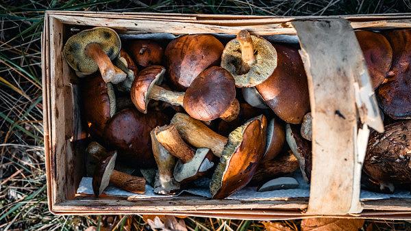 Tipps Pilze sammeln