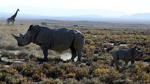 Südafrika, Wildlife, explore.org