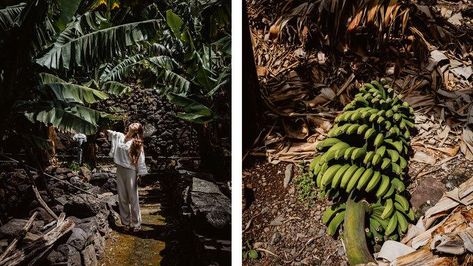 Madeira_Rota do Banana