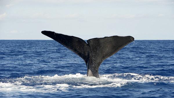 lobosonda, whale watching madeira