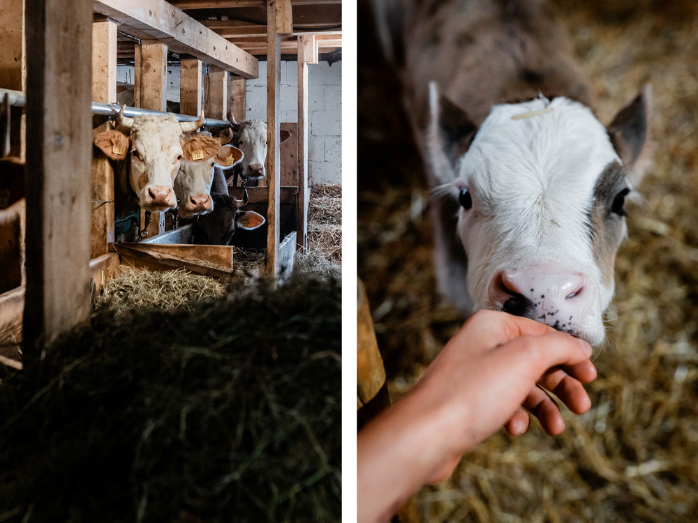 Volunteering Schweiz, Bergeinsatz Caritas, Mürren, Bauernhof, Kühe