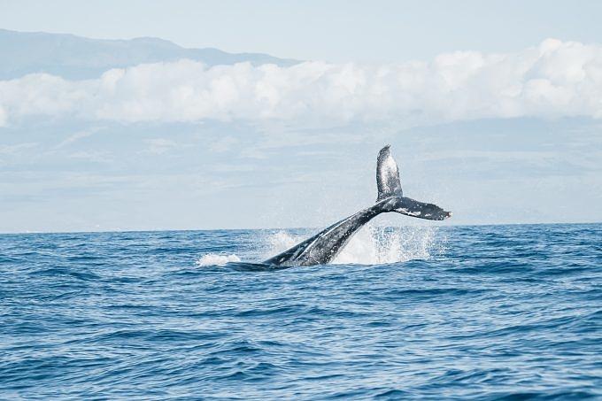 Meer schützen, Meeresschutz, Wal